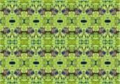 Euphorbia small